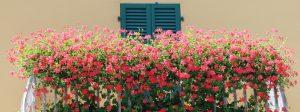 Il terrazzo fiorito